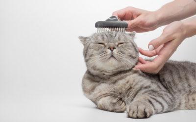 Pelo del gatto: come prendersene cura durante l'anno