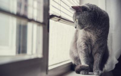 Il mondo sensoriale del gatto: conoscerlo per comunicare