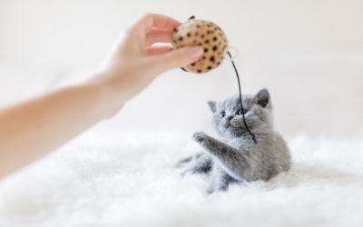 Cinque passi per arricchire la vita del nostro gatto