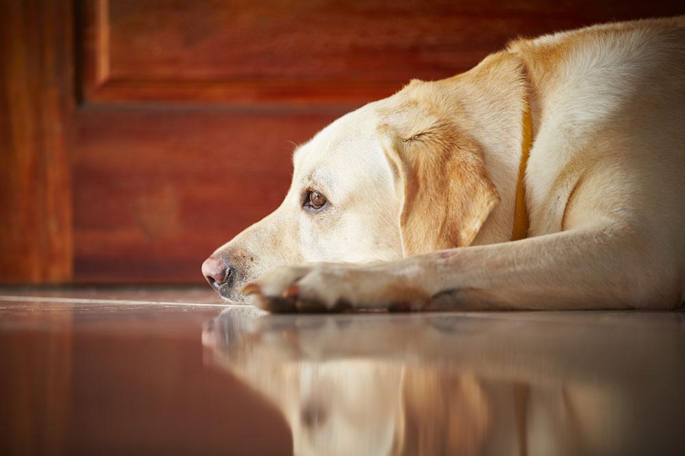 L'ansia da separazione nel cane