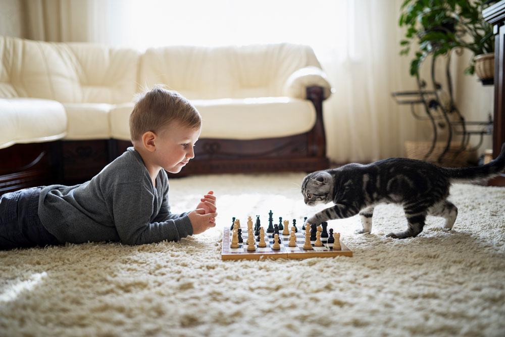 Cinque facili accorgimenti per prevenire l'invecchiamento del gatto