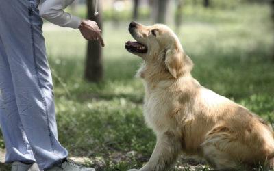 Le 10 regole d'oro per educare il cane