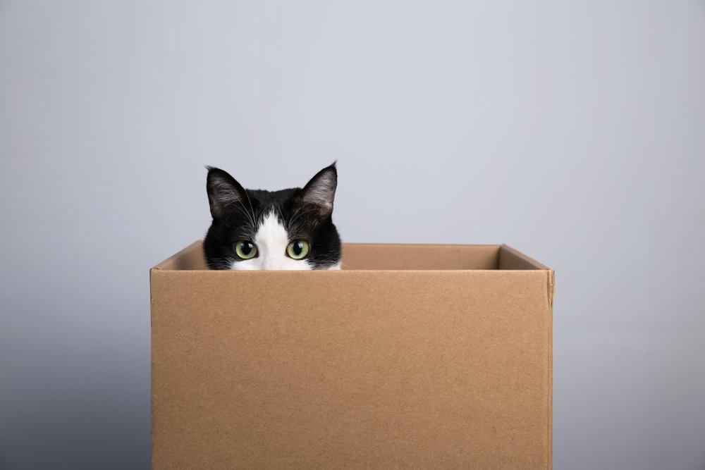 Metti in gioco la curiosità del tuo gatto!