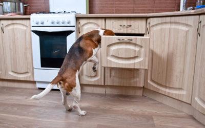 Favorire il comportamento esplorativo del cane